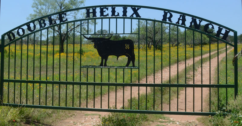 Double Helix Ranch Gate